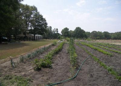 Farming | Herbs