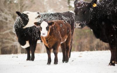 A Walk Around the Farm in the Snow
