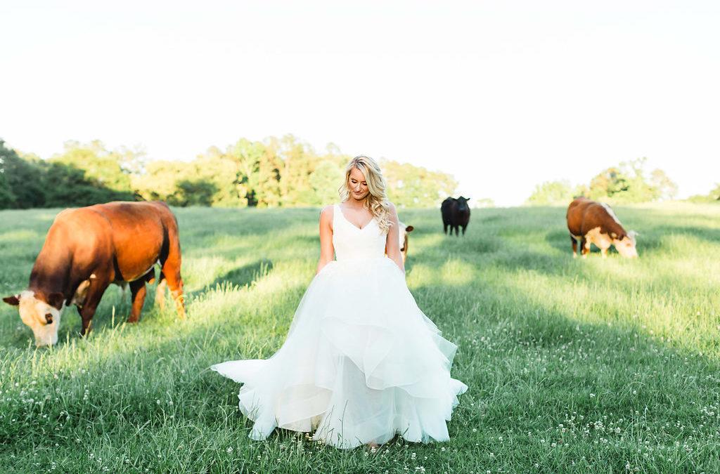 Taylor's Bridals- April 2017