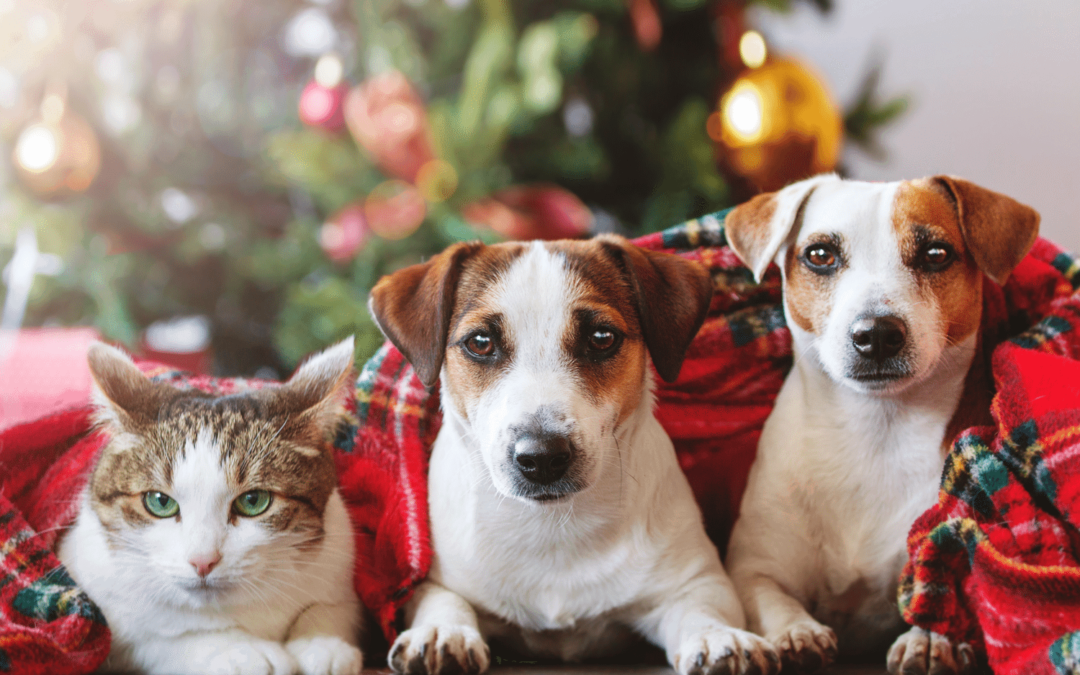 Just in Time for Christmas Stockings: CBD Oil for Pets